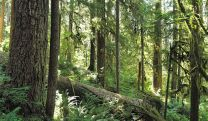 Undergrowth in Olympic National Park. Photo by Miguel.v. Wikimedia